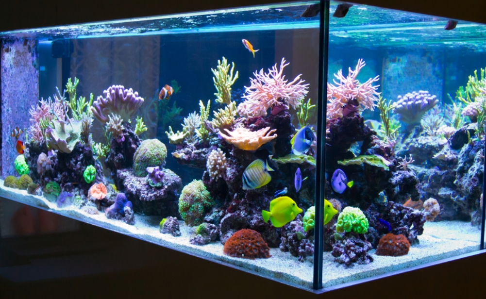 Best Paint for Aquarium Glass Reviews 2020